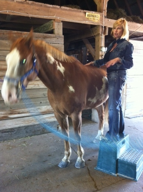 Star energy healing equine - kelly hampton