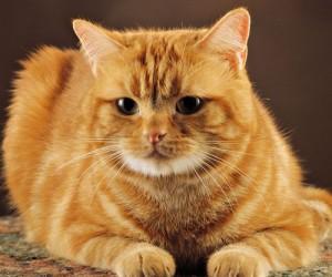 cute-red-cat