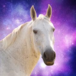 Star Healing Equine - Kelly Hampton