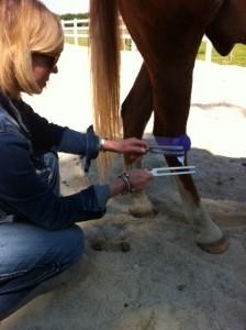 Kelly Hampton Energy Healer for Horses
